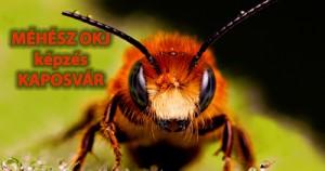 Méhész - OKJ Képzés, Tanfolyam, Vizsga - M-STÚDIUM