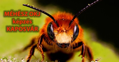 Méhész OKJ Kaposvár